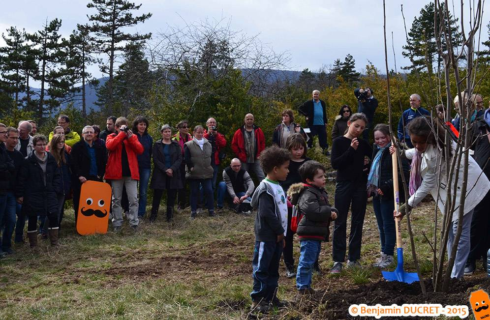 Cormier planté lors de la Journée des Forêts - Fierloz - 2015