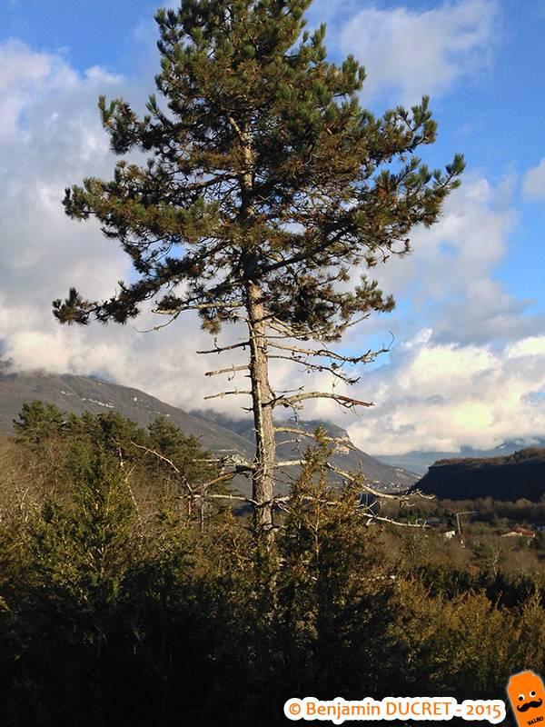 Un pin sur le Fierloz