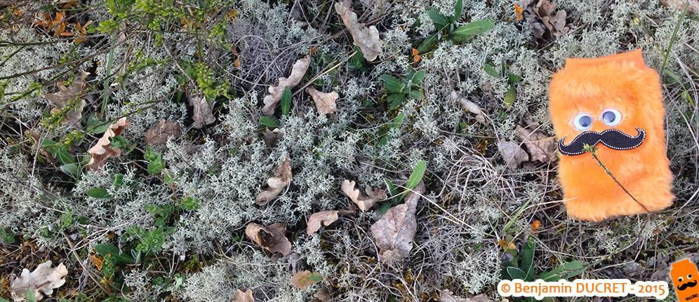 Valro au milieu des lichens du Fierloz